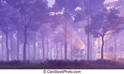 Sunset rays in misty pine forest 4K - Dreamlike woodland...