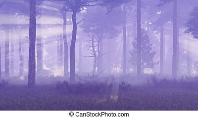 Foggy and magic pine forest at dusk 4K - Misty pine forest...