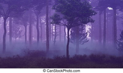 Misty forest at sunset time lapse - Woodland scene with...
