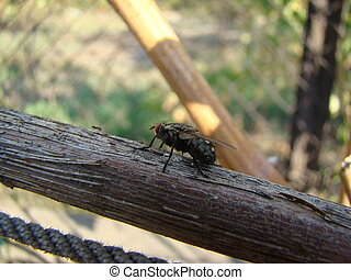 flies - Flies are insects included in the order Diptera
