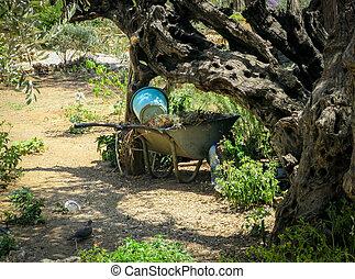 Wheel Barrow in Garden - A wheel barrow under an olive tree...