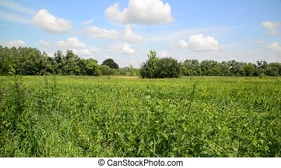 Meadow in summer day in central Russia - Meadow in a summer...