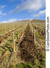vineyard, Mot et Chandon, Ay, Champagne Region, France