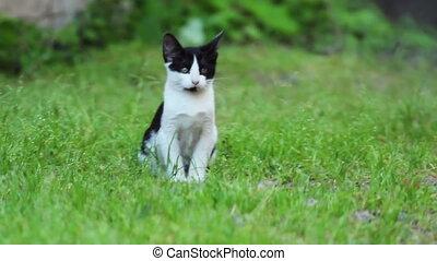 Black and white Kitten sitting on Green Grass