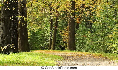 Forest in a fall