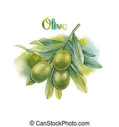 Watercolor green olive branch