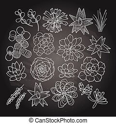 Graphic succulent collection isolated on chalkboard. Vector...