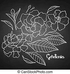 Graphic gardenia set isolated on chalkboard. Vector floral...
