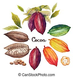 Watercolor cocoa fruit colection isolated on white...
