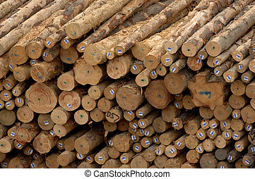 A pile a logs timber waits at a mill for chipping