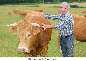 Farmer next to steer