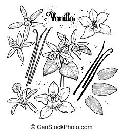 Graphic vanilla flowers collection isolated on white...