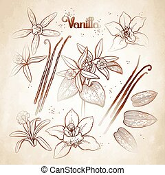 Graphic vanilla flowers collection isolated on aged paper....