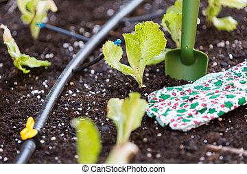 Small lettuce garden - Organic garden with irrigation and...