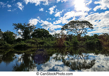 Yacuma river. Bolivian jungle. Amazon.