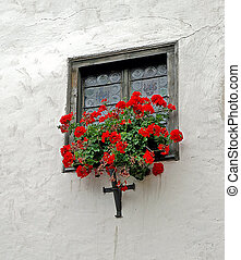 red geraniums in window box - house window with etched glass...