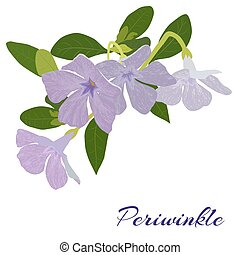periwinkle painted on a white background - painted a bouquet...