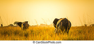 Elephants Walking Away On African Plains - Herd of elephants...