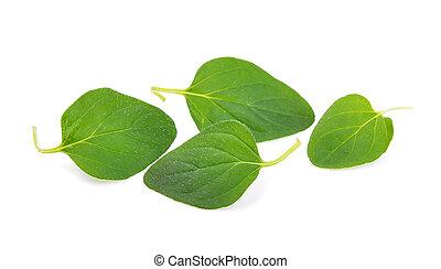 oregano leaf on white background