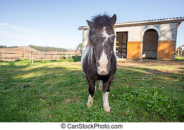 Pony by Stable - Full length portrait of a pony in front of...