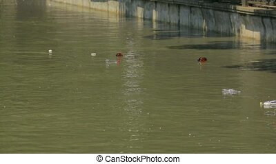 Plastic Bottles Floating In City River - Plastic bottles...