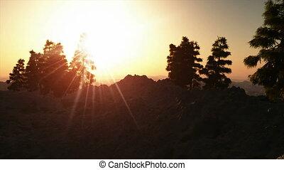 mountain pine woods on sunset, with sun light rays...