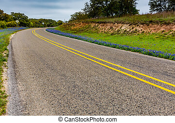 Famous Texas Bluebonnets - Beautiful Roadside Covered with...