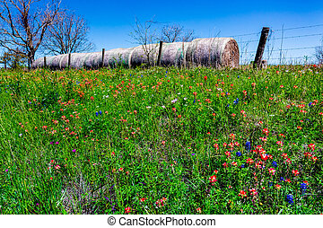 Round Hay Bales & Texas Wildflowers - A Meadow at a Farm or...