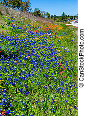 Various Texas Wildflowers - A Beautiful Texas Roadside...