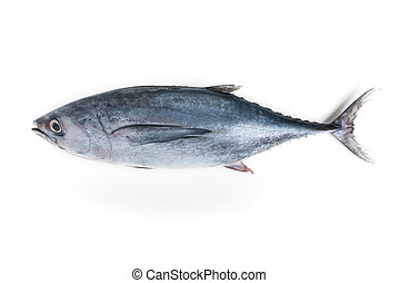 longtail tuna isolated on white