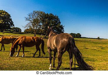 pferde - weide
