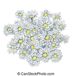 hand drawn graphic flowers golden-daisy on white background