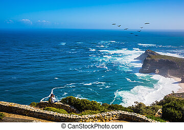 Flock of migratory birds - Cape of Good Hope - the most...