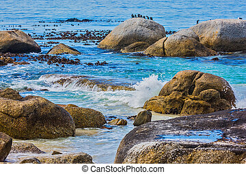 Boulders Penguin Colony in South Africa