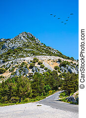 The migrating cranes over road - The bend on a mountain road...