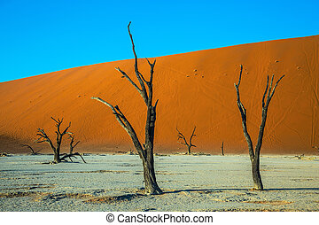 Ecotourism in dried lake Deadvlei - Ecotourism in Namibia....