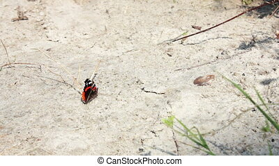 red and black butterfly on the sand