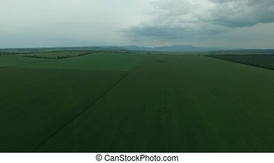 Aerial. Wheat field - Aerial. Green wheat field on the...