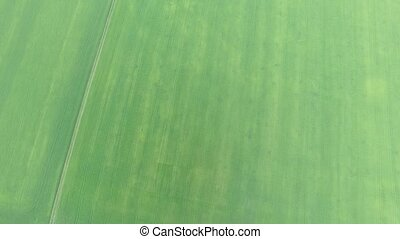 Aerial. Green field - Aerial. Green cereal field swaying in...