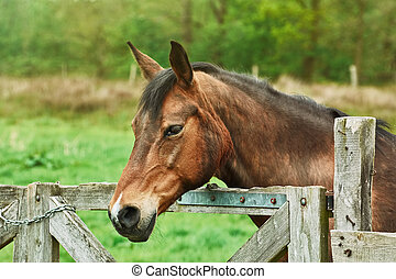 Portrait of the Horse - Portrait of Brown Horse near the...