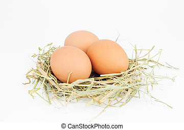 Raw Eggs in a nest isolated