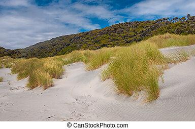 Dune Vegetation Wharariki Beach - Sand Dunes, Grass and...