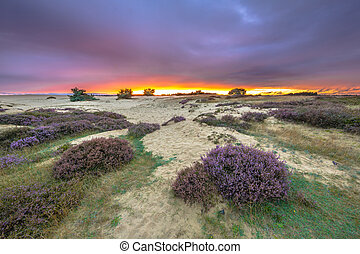 Dunes Grass and Heathland - Dunes, Grass and Heathland...