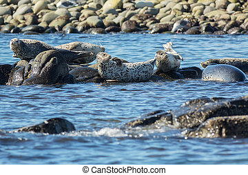 Pusa is a genus of earless seals. Island in the Pacific...