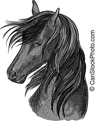 Horse head sketch of black arabian stallion - Sketched horse...