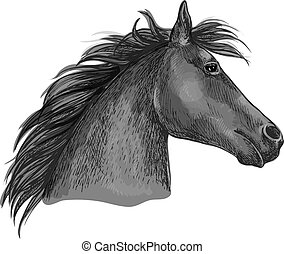 Black racehorse sketch with horse head of purebred arabian...