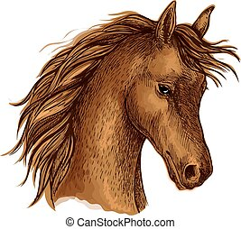 Brown arabian horse sketch for equine sport design -...