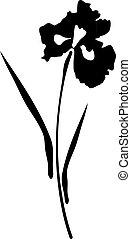 Iris flower - vector iris flower