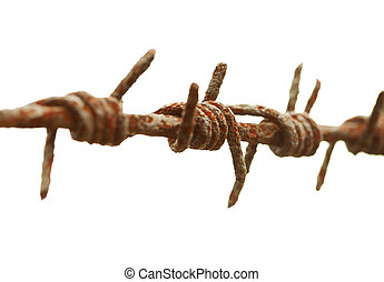 Ancient rusty barbed wire on a white background