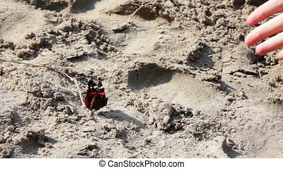 red and black butterfly on the sand - beautiful large red...